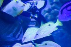 fish_feed_2_large